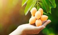 新肥推广:应加强终端农化服务