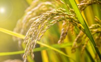 国务院:支持化肥等石化产业开展国际产能合作